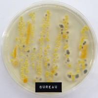 Kantoorbacteriën: wat huist er op je bureau?