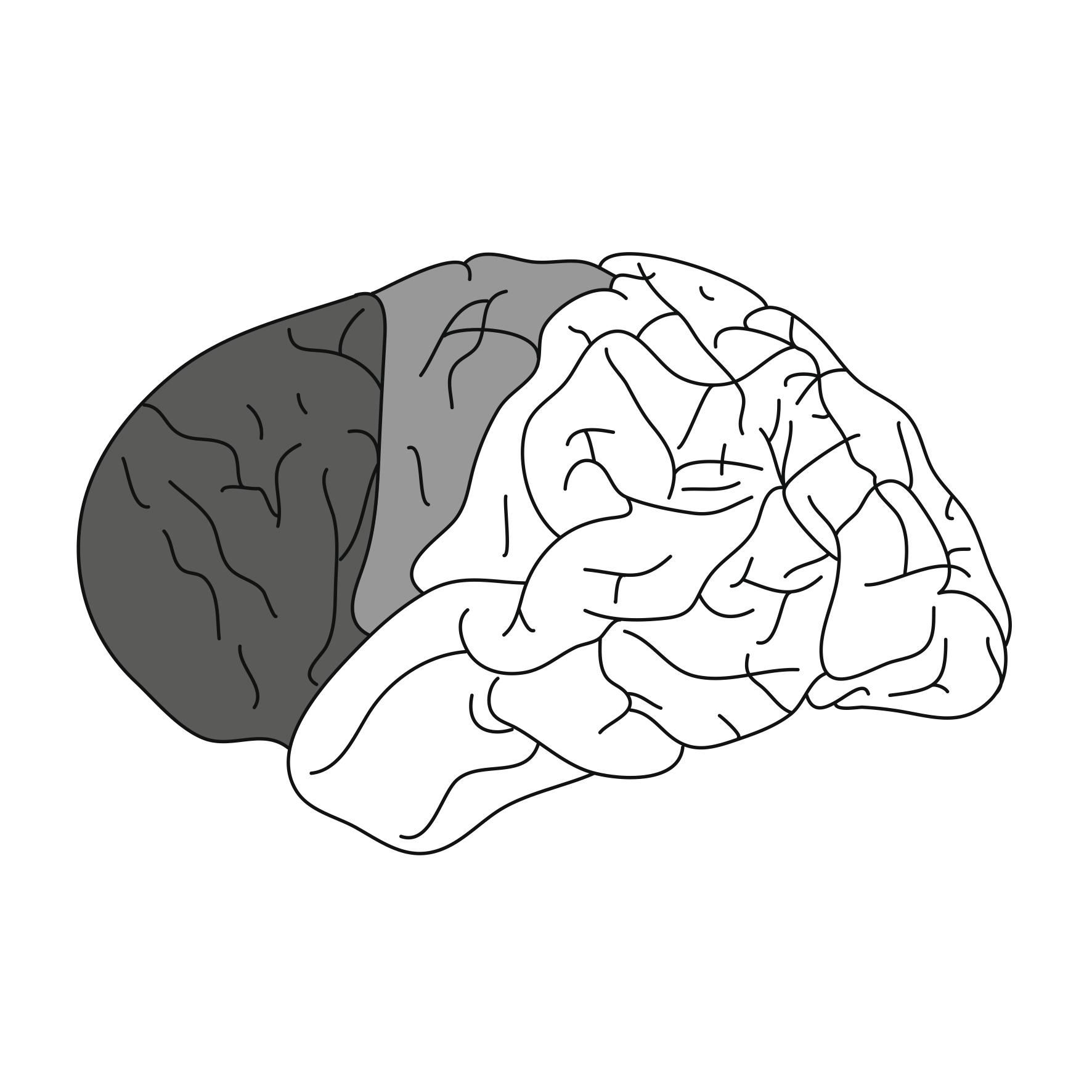 Smart Brains1_plaatje_prefrontale hersenschors